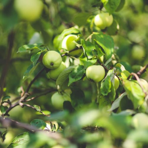healthy-nature-apple-leaf