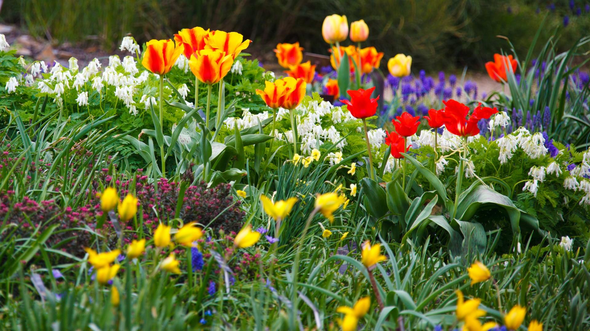 Spring Flower Garden Garland Nursery