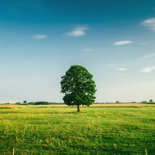 tree-field-horizon-countryside-81413