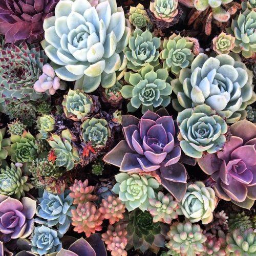 succulents_pt_2__(14857217026)
