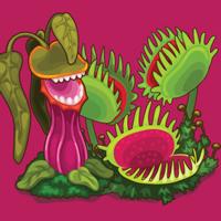Little Sprouts Carnivorous Plants