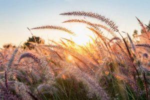 Autumn Grasses